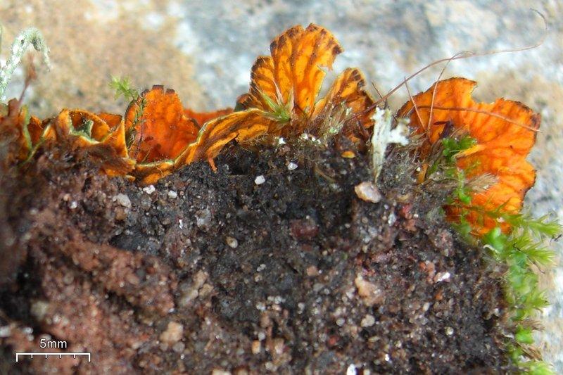 Ways Of Enlichenment Lichens Of North America